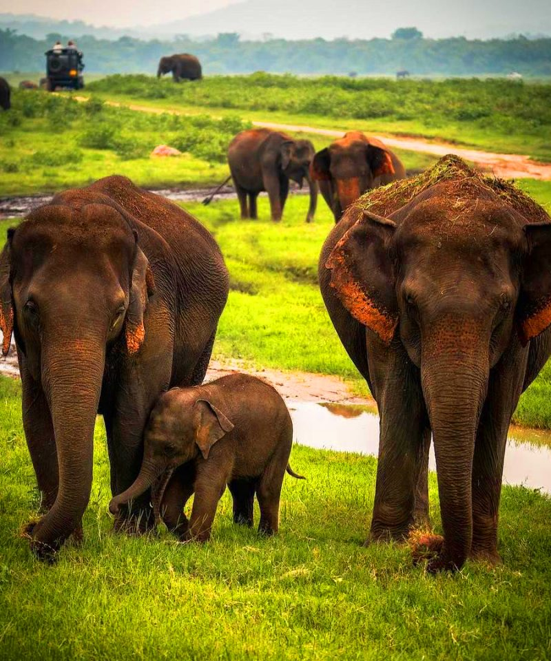 Wildlife Sri Lanka Elephants Sri Lanka https://fantasylankatours.com/